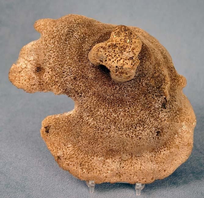photo of a Glass Sponge Bottom View
