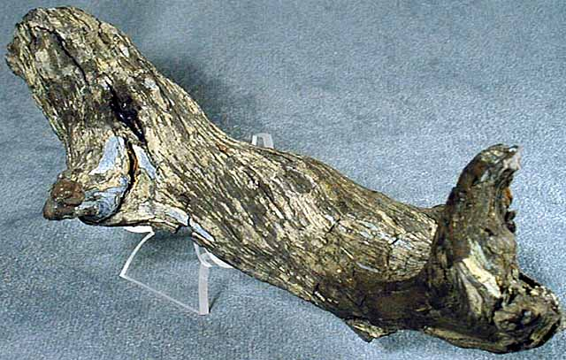 photo of a Carbonized wood (coal)
