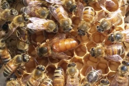 A close-up photo of several bees crawling on a hive