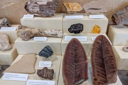 Fossils inside the museum