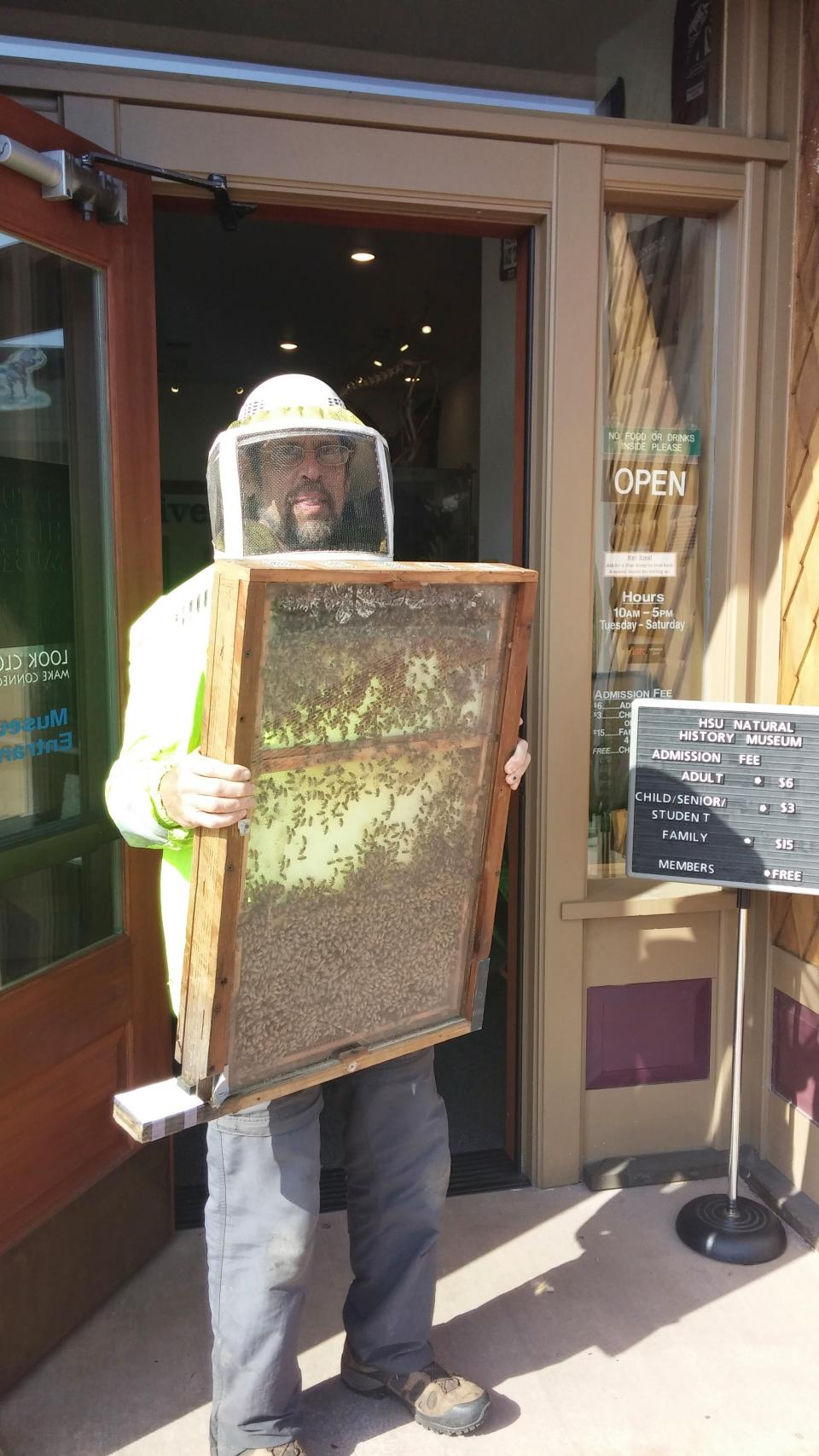 NHM Volunteer Bee Keeper Dick LaForge taking the observation bee hive into the museum.