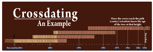 a visual example of crossdating a tree trunk