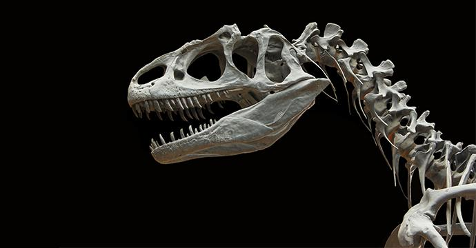 Photo of a T-Rex skeleton with a black background