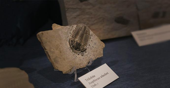 Photo of a Trilobyte fossil exhibit