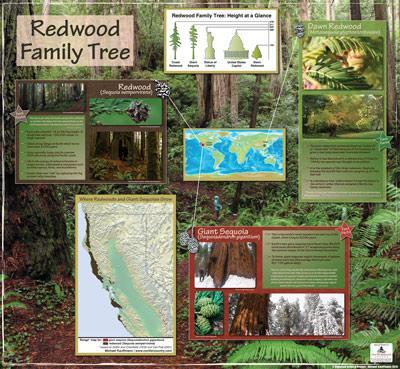 Redwood Family Tree