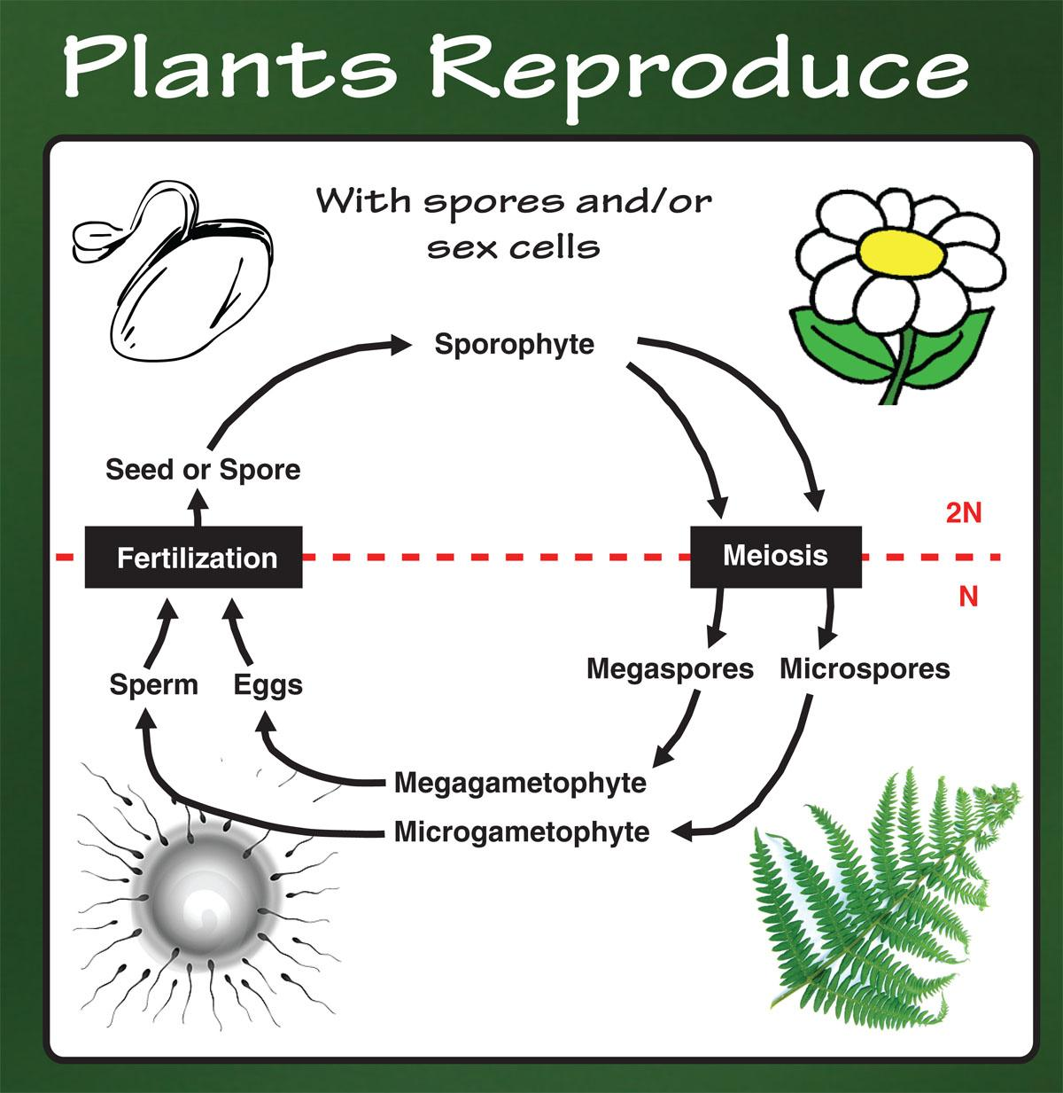 Plants Reproduce with spores and/or cells.