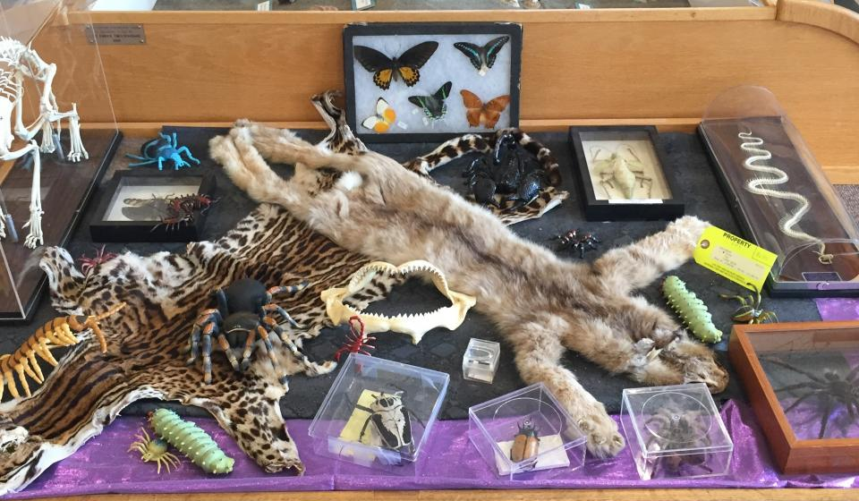Touch table with furs, skeletons and insects